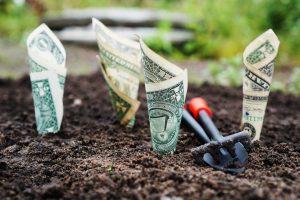 growing dollar bills